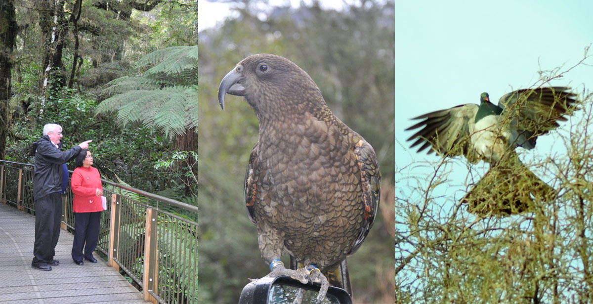 See amaxing wildlife on your trip to Milford Sound